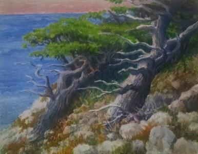 Twisted Trees, California Coast